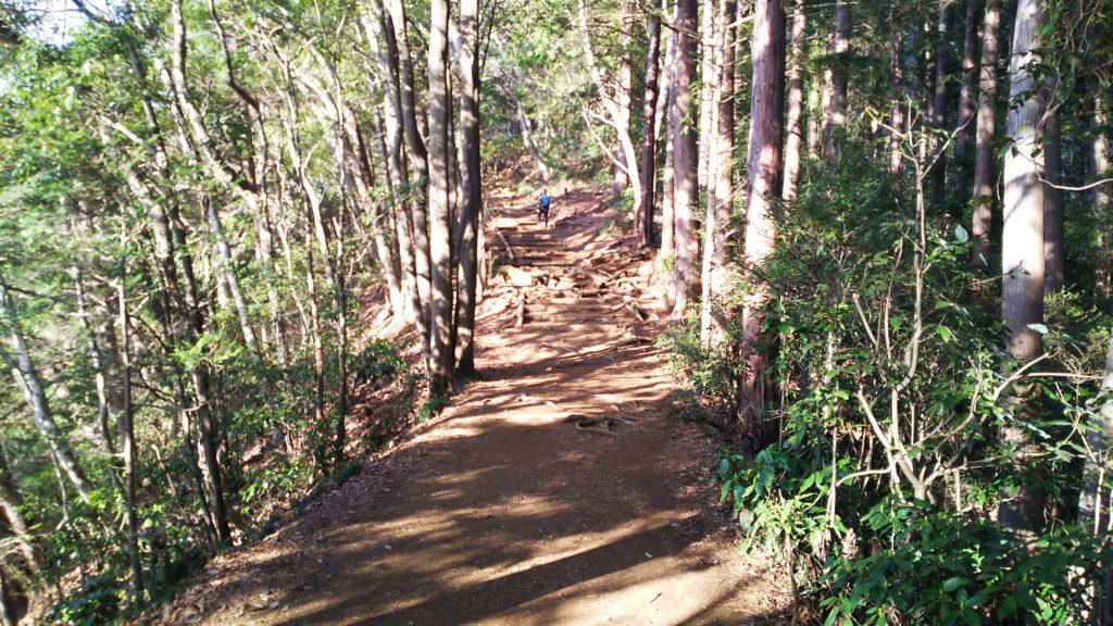 稲荷山 木漏れ日を受ける登山道